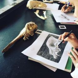 Sketching skulls